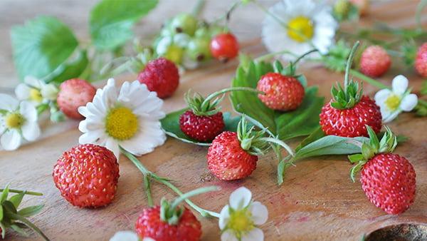 Erdbeeren mit Gänseblümchen auf holztisch