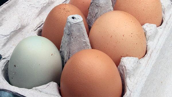 ein weißes ei in brauner eierschachtel