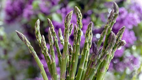 grüne spargelstangen vor violettem blumenhintergrund